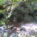 【浜松市】無料で子どもと遊べる川遊びスポット